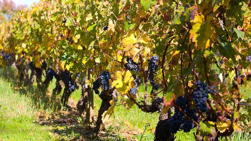 Thưởng thức thiên đường của rượu vang Bordeaux 1