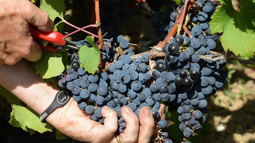 Thưởng thức thiên đường của rượu vang Bordeaux 3