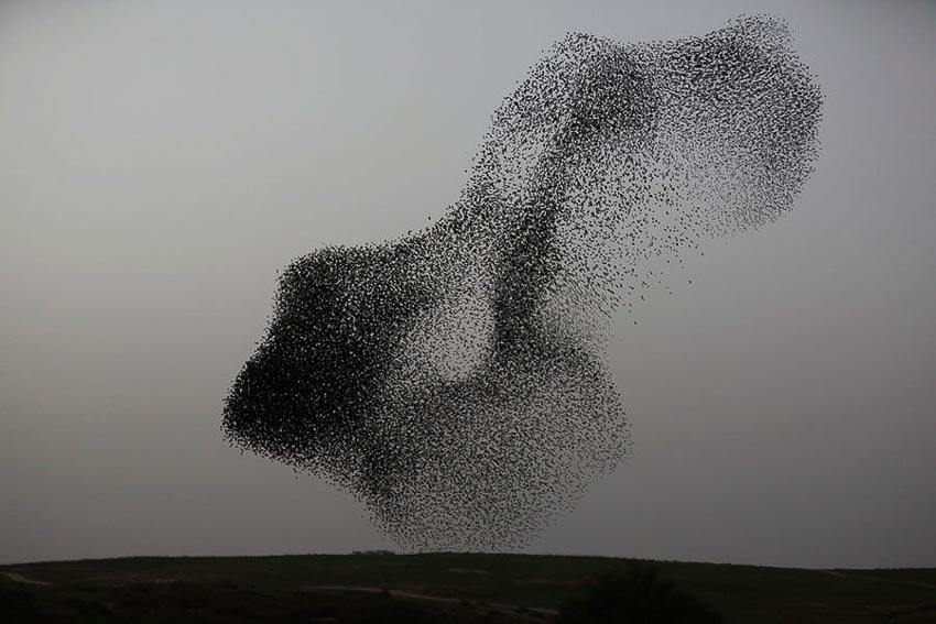 Vũ điệu chim Sáo đá 12