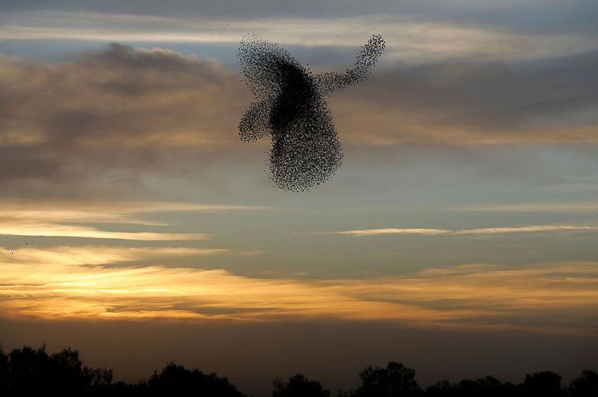 Vũ điệu chim Sáo đá 18