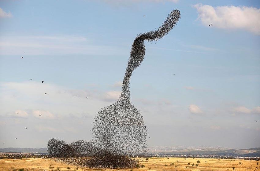 Vũ điệu chim Sáo đá 2