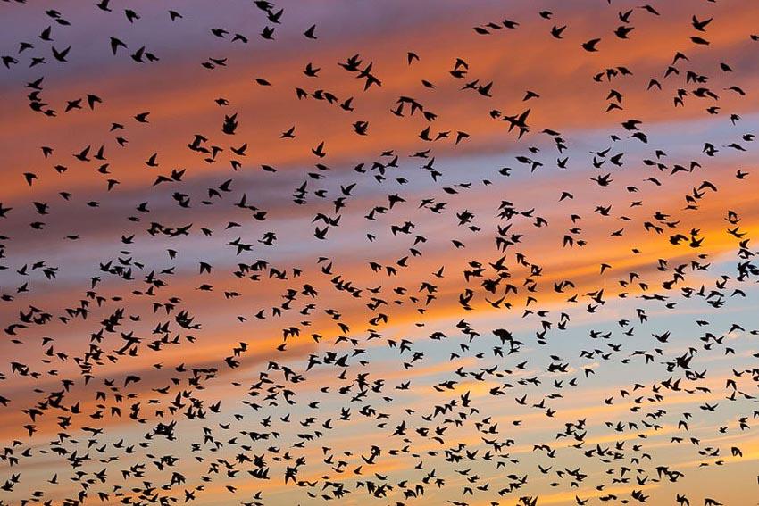 Vũ điệu chim Sáo đá 3