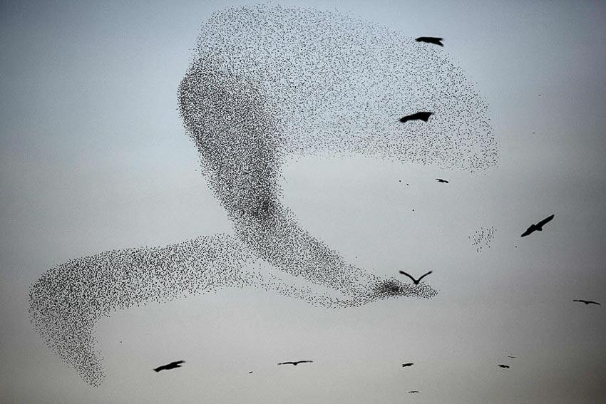 Vũ điệu chim Sáo đá 4