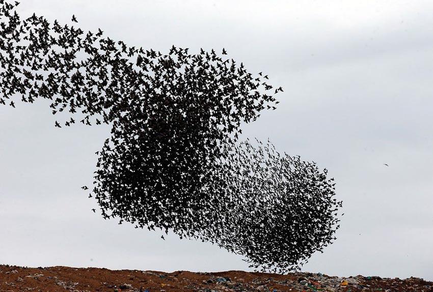 Vũ điệu chim Sáo đá 11