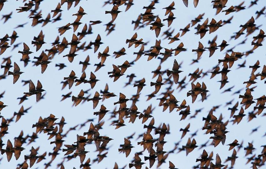 Vũ điệu chim Sáo đá 7