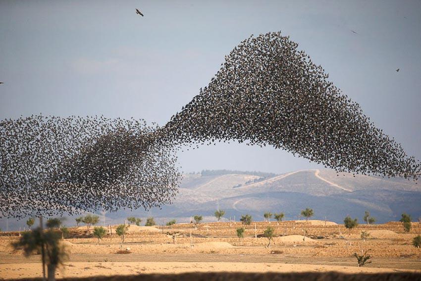 Vũ điệu chim Sáo đá 10