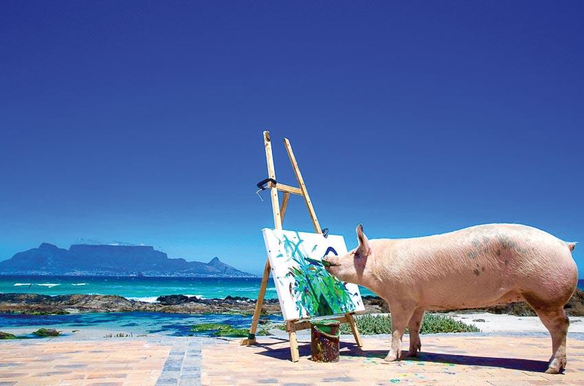 Pigcasso đang vẽ tranh phong cảnh