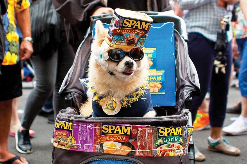 Một hình ảnh vui trong lễ hội Spam Jam
