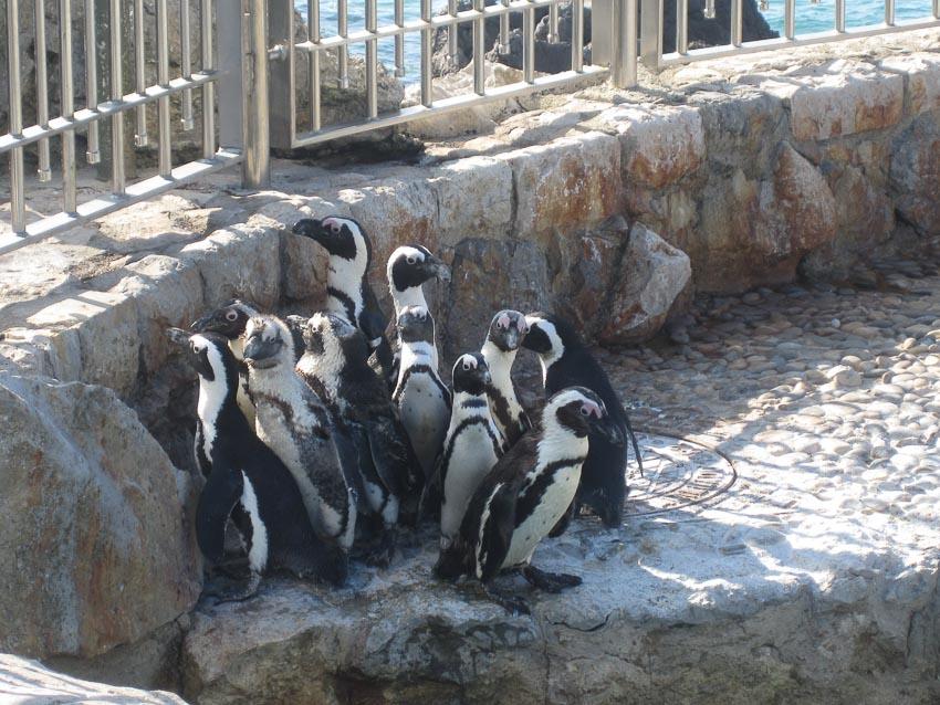 Vườn thú nhỏ