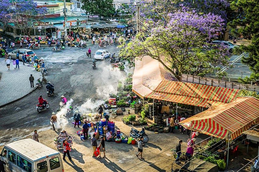 Phượng tím nở rộ trên đường phố Đà Lạt 7