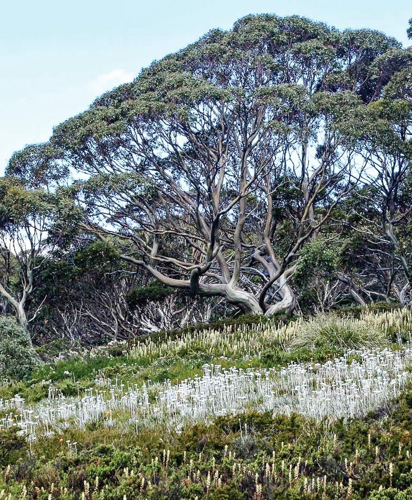 Thảm thực vật hấp dẫn trong rừng quốc gia