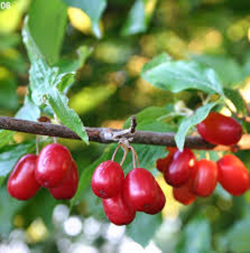 10 điều thú vị về trái cây mà bạn chưa biết 6