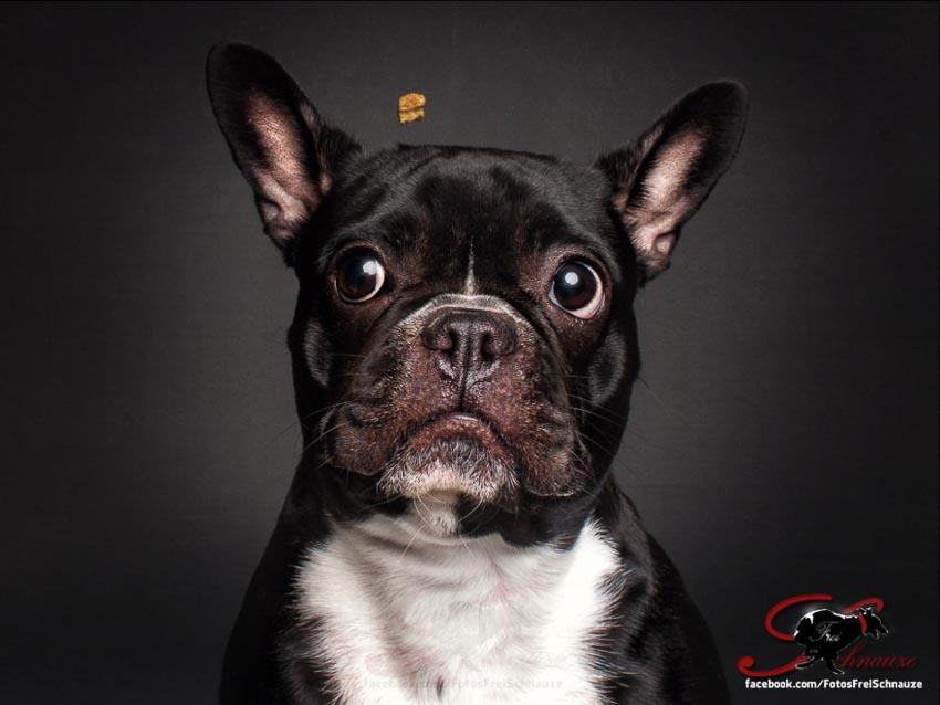 Bộ ảnh những chú chó đang cố gắng bắt thức ăn với biểu cảm hài hước