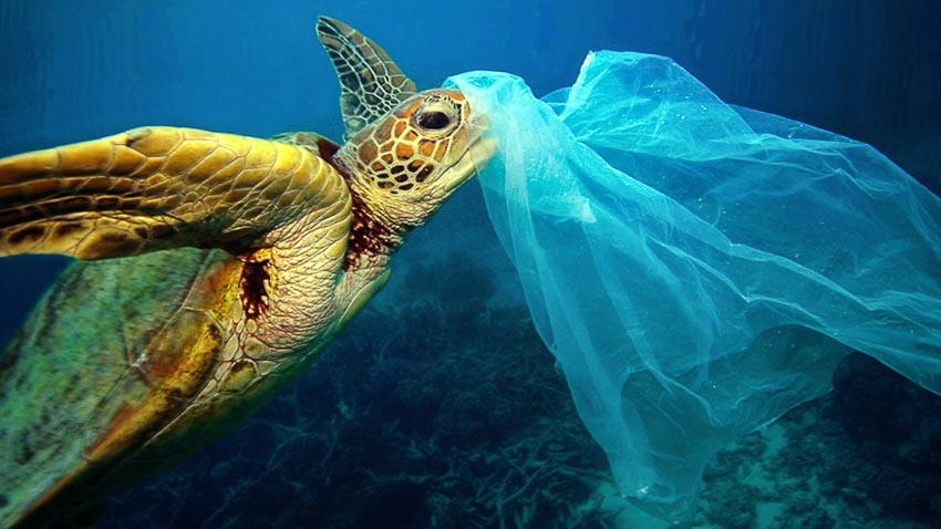 Những con rùa già có xu hướng thích các loại nhựa mềm và trong suốt hơn