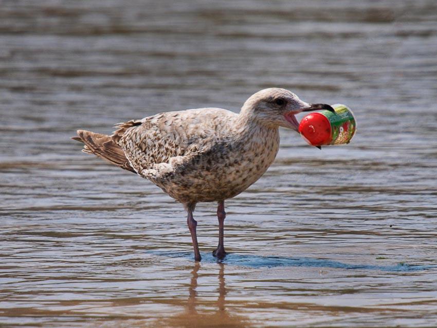 Rác thải nhựa đang đe dọa sinh vật biển