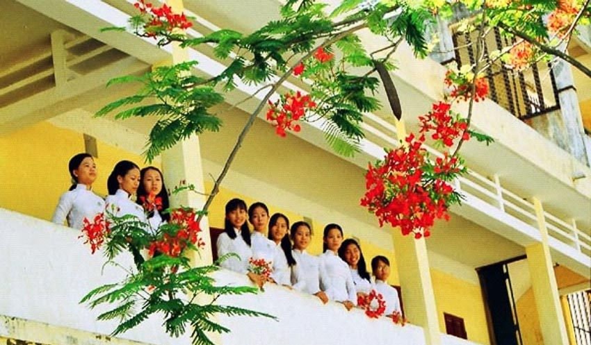 Nét đẹp văn hóa của những hàng hoa phượng đỏ đang qua đi