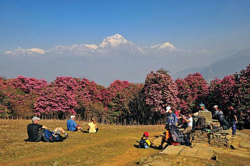 Nepal mùa hoa đỗ quyên