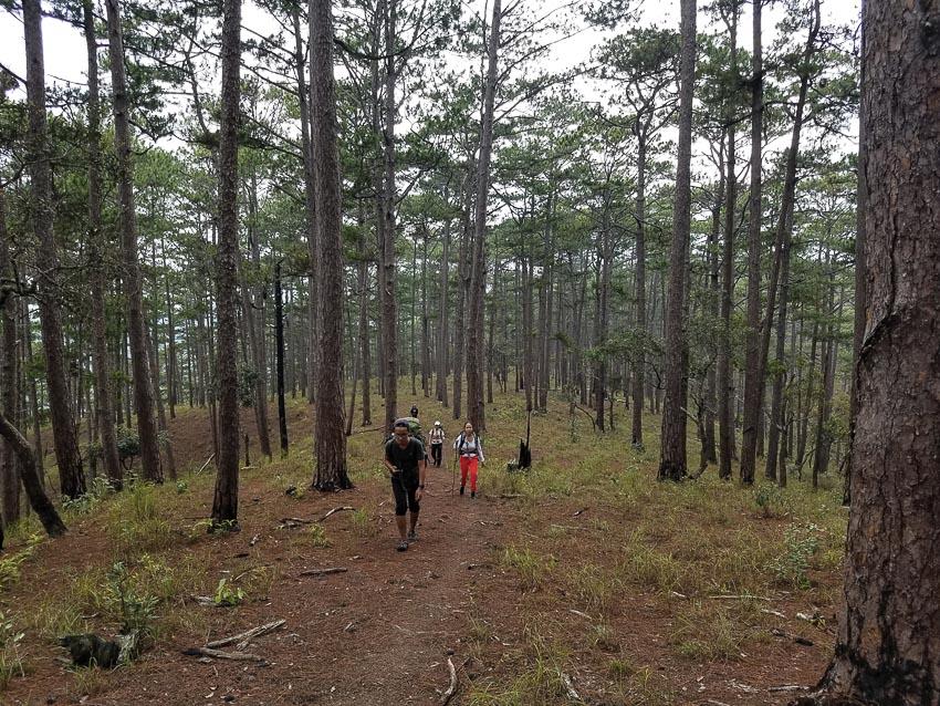 Cảnh sắc đồi thông, vạt cỏ, những mảng rừng vừa cháy lớp thực bì loang lổ như da báo... 1