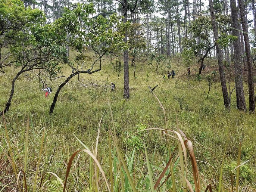 Cảnh sắc đồi thông, vạt cỏ, những mảng rừng vừa cháy lớp thực bì loang lổ như da báo... 2