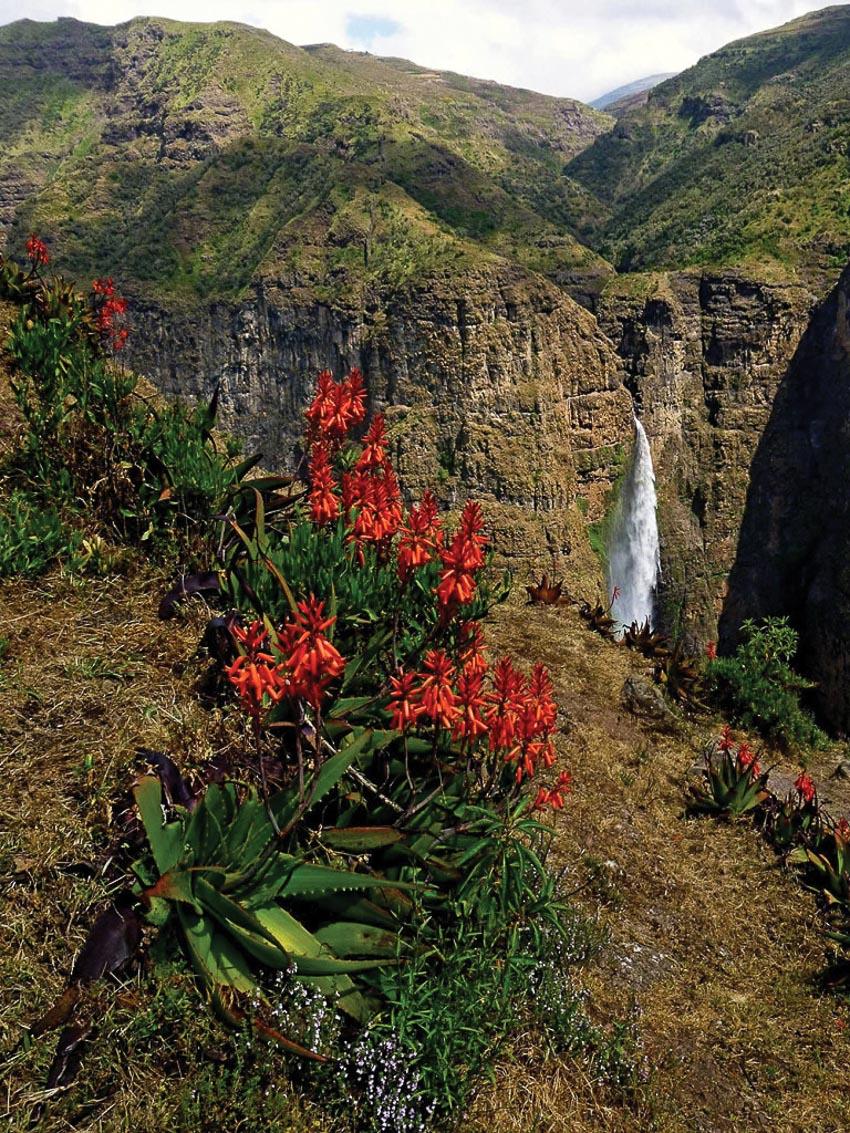 Khám phá vườn quốc gia Simien hoang dã ở Ethiopia 6