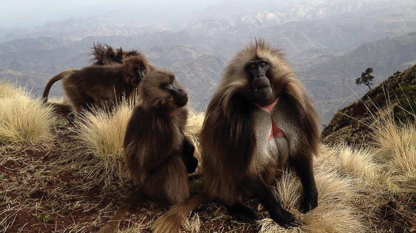 Khám phá vườn quốc gia Simien hoang dã ở Ethiopia 8
