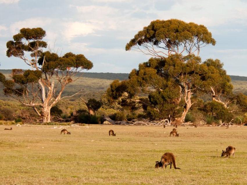 12 địa điểm đáng tham quan ở Úc ngoài Sydney 10