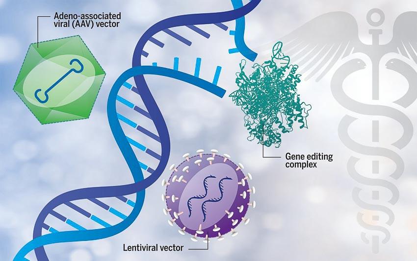 5 cách gien tác động đến cuộc sống con người 10