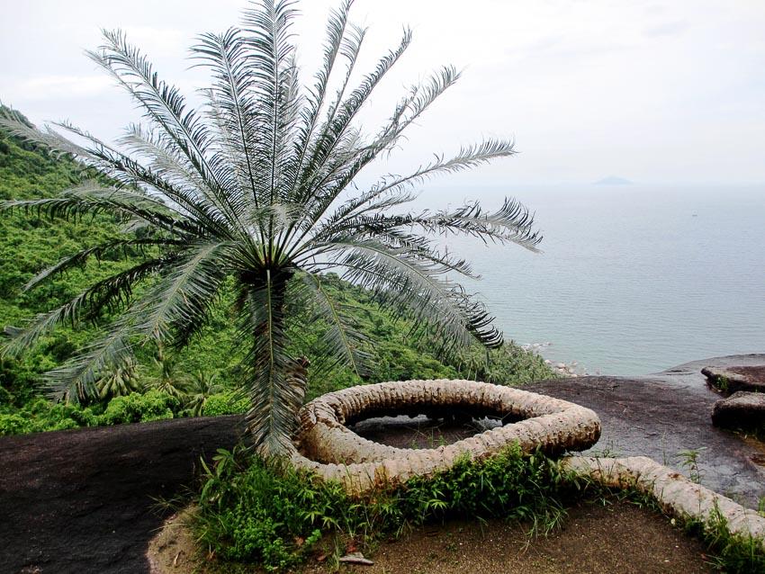 Ông Rồng (cây Thiên tuế có hình dạng như rồng cuộn) trên 500 tuổi