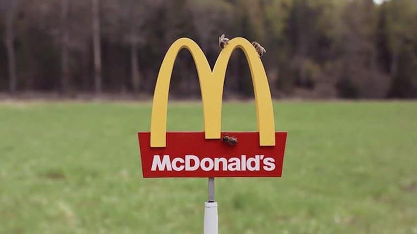 McDonald's mở nhà hàng thu nhỏ dành cho những chú ong 1