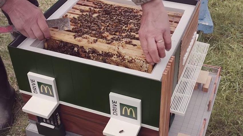 McDonald's mở nhà hàng thu nhỏ dành cho những chú ong 5