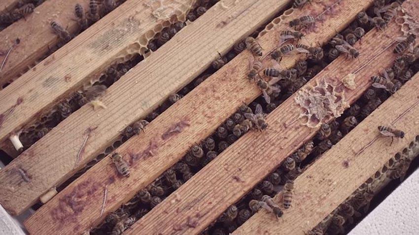 McDonald's mở nhà hàng thu nhỏ dành cho những chú ong 6