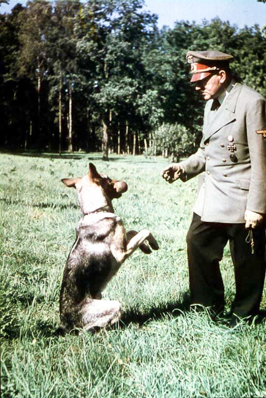 Phát xít Đức từng đào tạo chó... siêu thông minh 2