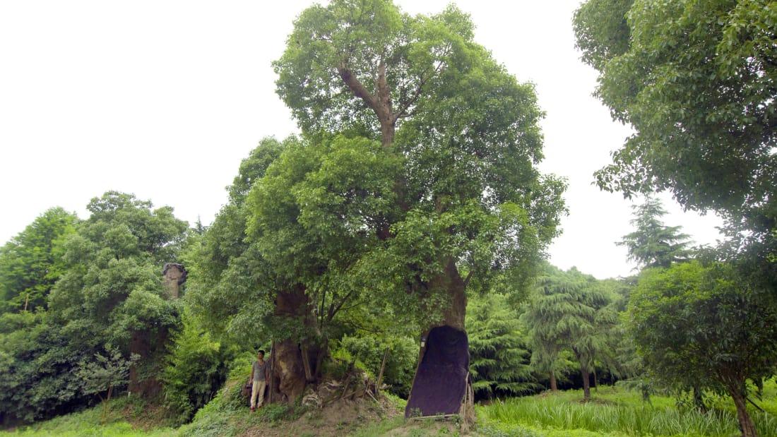 Triệu phú Madong cứu rừng bs