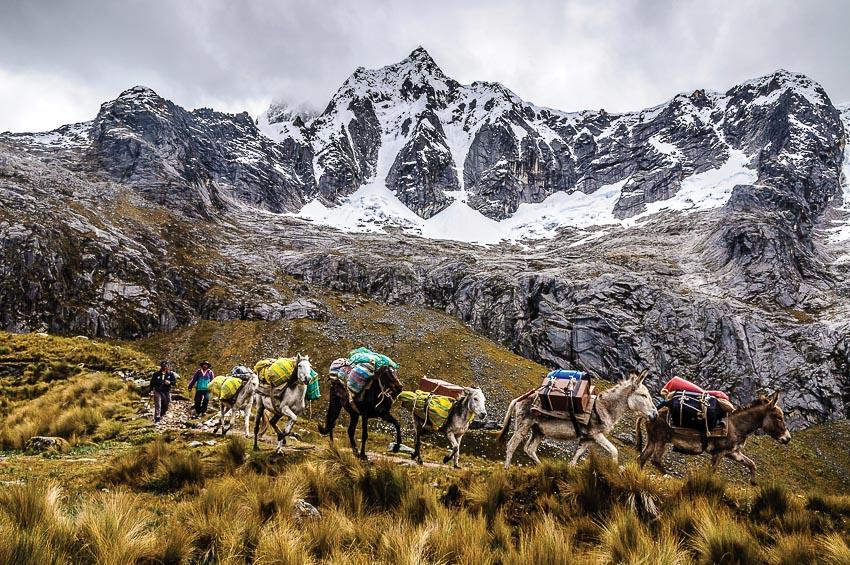 Đoàn ngựa thồ đồ đạc của người Quechua