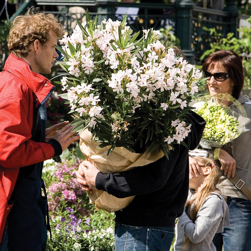 Người người mua hoa tấp nập
