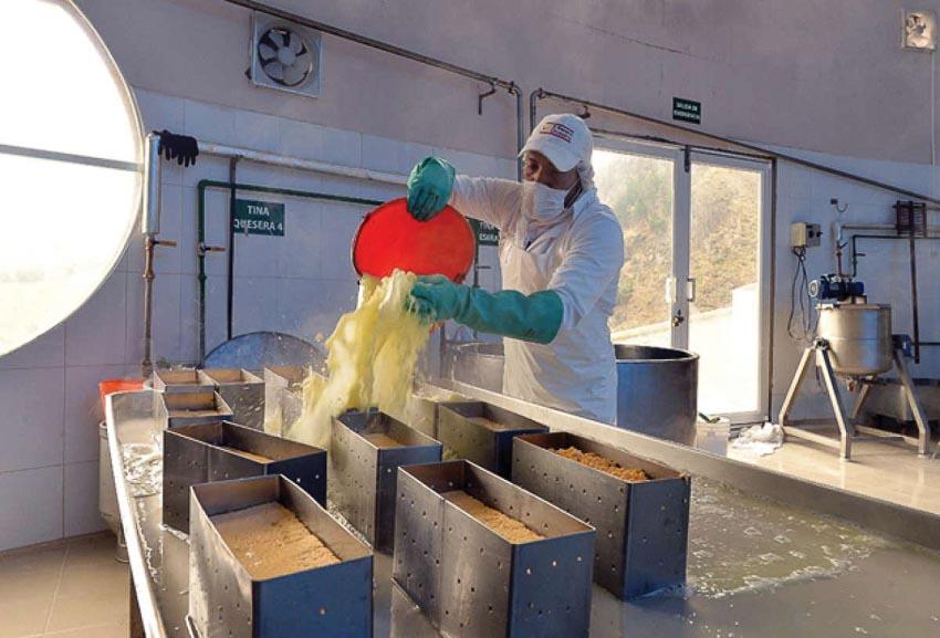 Trong xưởng sản xuất phô mai ở Salinas