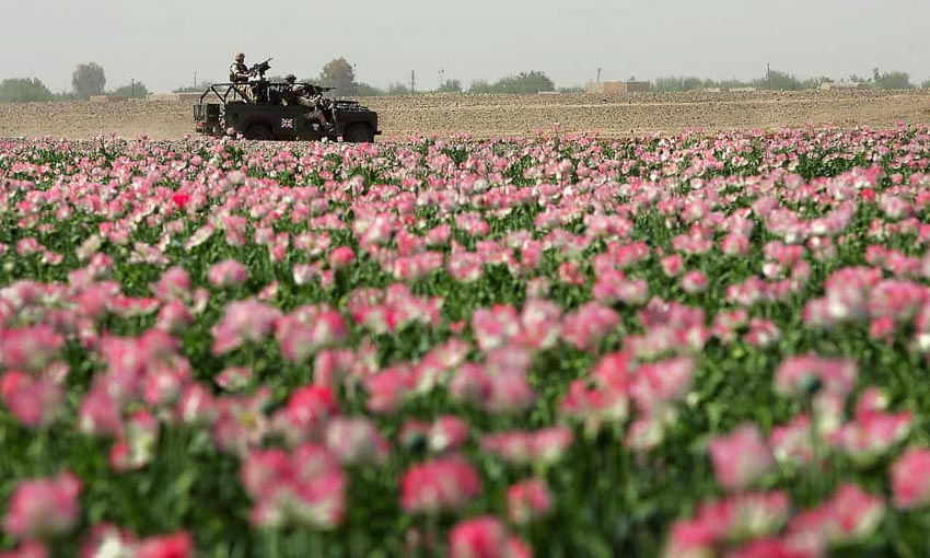 Heroinee là nguyên nhân Mỹ thất bại ở Afghanistan - 3