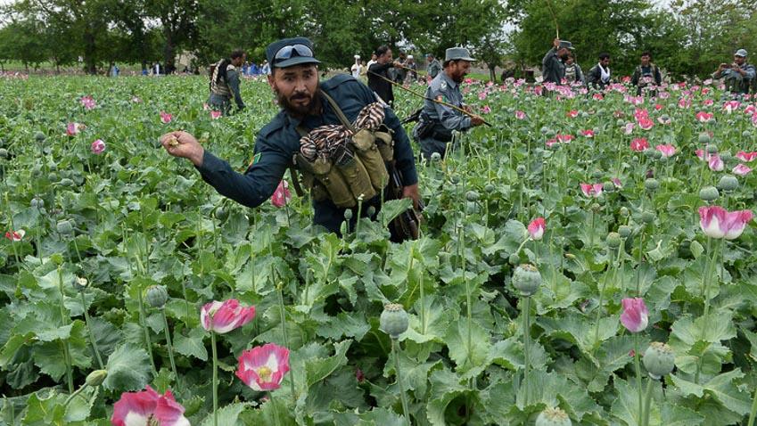 Heroinee là nguyên nhân Mỹ thất bại ở Afghanistan - 6