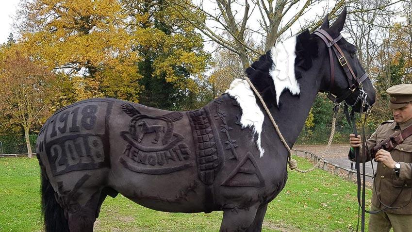 Melody Hames - người thiết kế những bộ lông ngựa 4