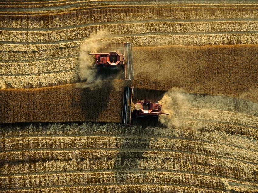 Những nhà nông cứu vãn lương thực thế giới - 2