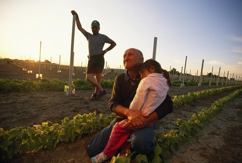 Những nhà nông cứu vãn lương thực thế giới - 3
