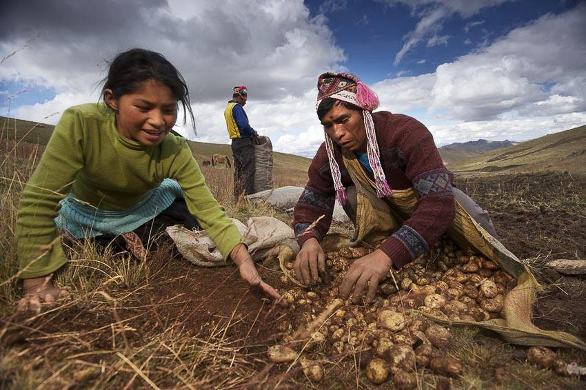 Những nhà nông cứu vãn lương thực thế giới - 4
