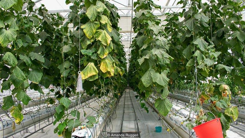 Tương lai phát triển nông trại trên sa mạc 11