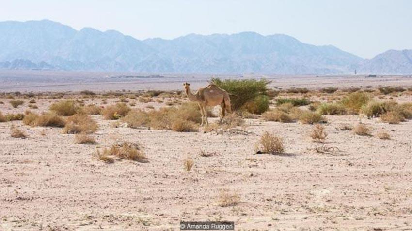 Tương lai phát triển nông trại trên sa mạc 2