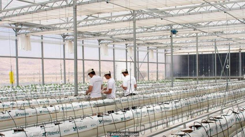 Tương lai phát triển nông trại trên sa mạc 5