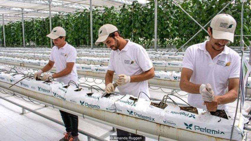 Tương lai phát triển nông trại trên sa mạc 7