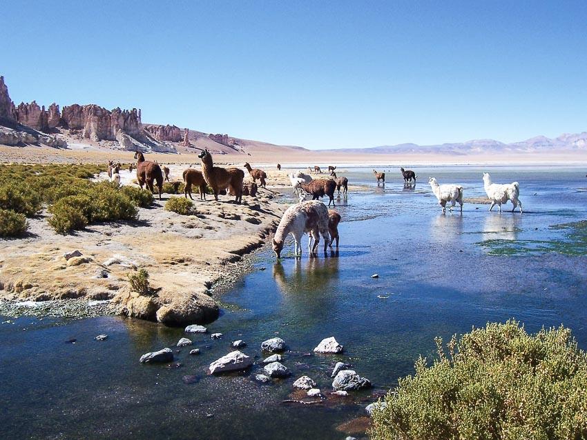 Chinh phục Salar de Tara - sa mạc cao nhất thế giới 7