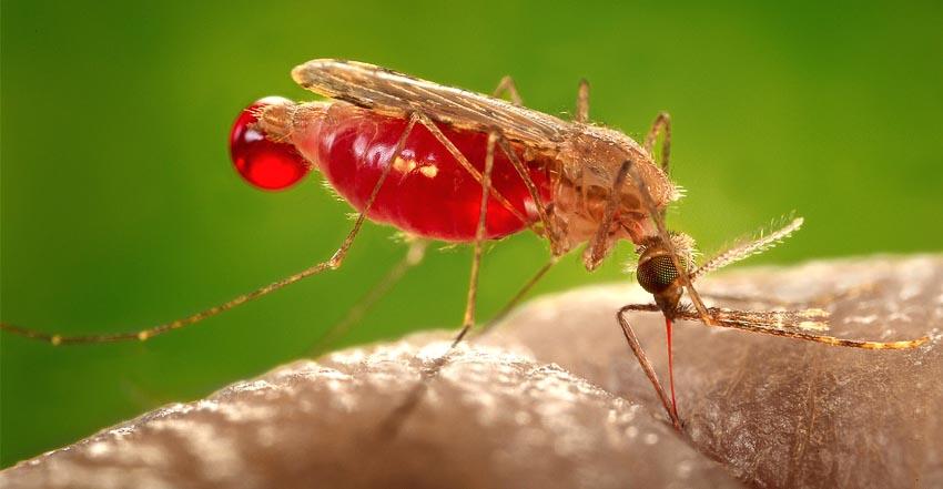 ADN có thể cứu được những sinh vật bị đe dọa? - 4