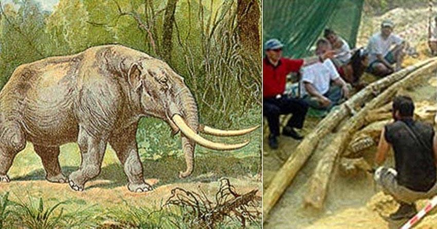 Câu chuyện về những hóa thạch được phát hiện từ thời cổ đại - 1
