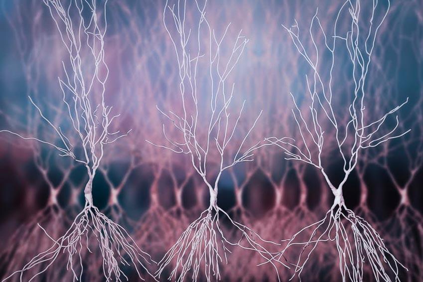 Lần theo nguồn gốc gây bệnh Alzheimer -2